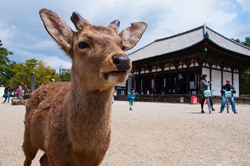 奈良公園2.jpg