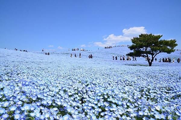 海濱公園.jpg