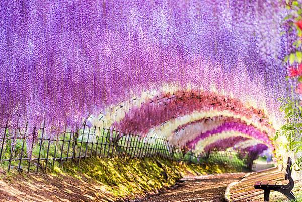 紫藤2 (1).jpg