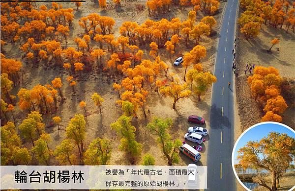 愛旅遊【美麗新疆全覽18+1天】-輪台胡楊林