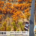 愛旅遊新疆全覽18+1日-輪台胡楊林_03行程特色-02
