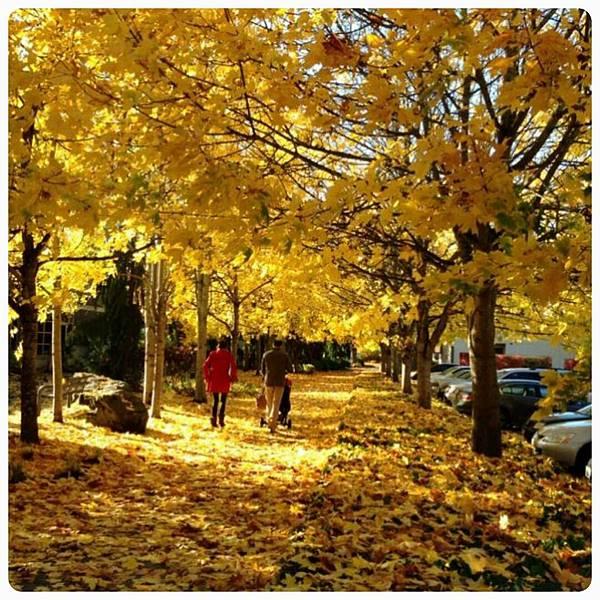 西雅圖的秋天