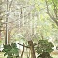 地衣森林海報