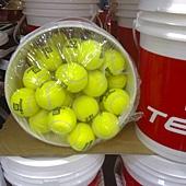 96741 WILSON  網球練習球 72顆 附桶子 1999 02