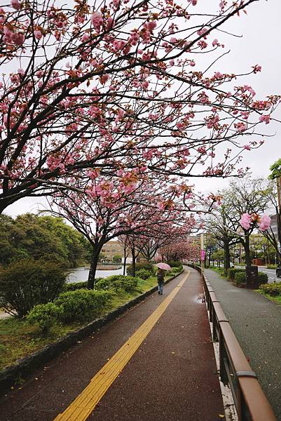 九州行 13.JPG