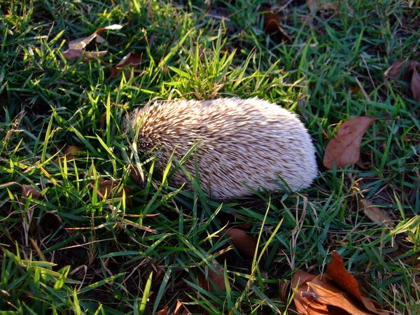發現草裡有東西