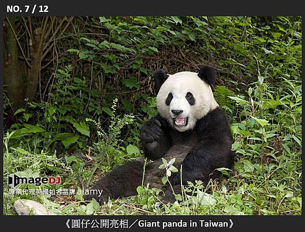 07-《圓仔公開亮相/Giant panda in Taiwan》