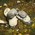 甜蜜ㄉ烏龜