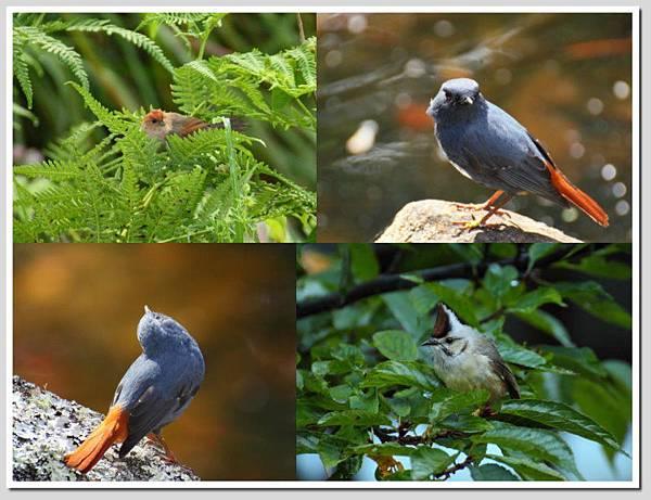 武陵的鳥.jpg