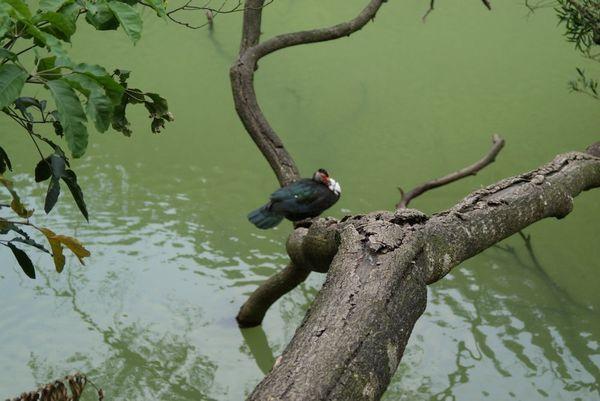 tn_08-05-18薑母鴨.JPG