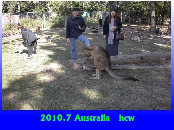kangaroo-2.jpg