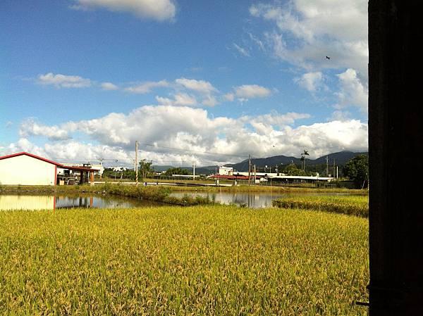 松樹湖01