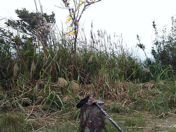 鴻子山.JPG