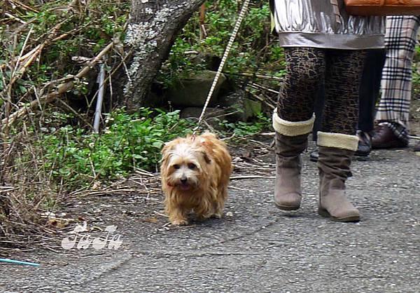 可愛的老狗狗