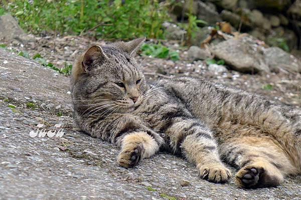 喵:你們很煩耶,我想睡覺一直吵
