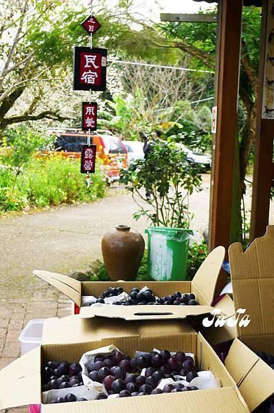 民宿有賣葡萄