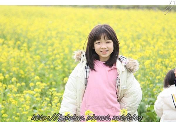 再訪嘉義新港板頭村_46.JPG