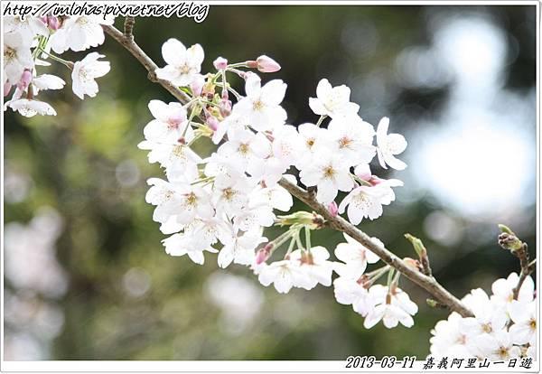 嘉義阿里山一日遊_46