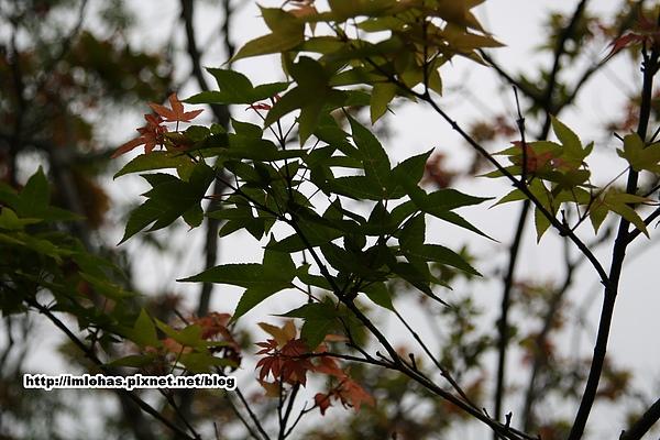 關子嶺紅葉公園09.JPG
