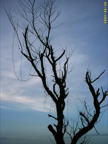 青空枯樹,周董的MV拍過