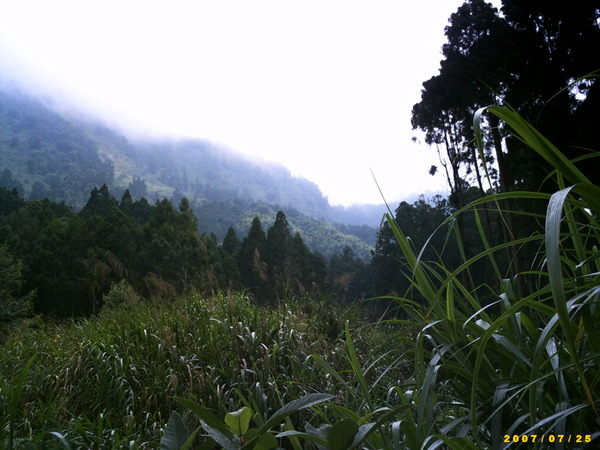 遠山,近樹和蘆葦