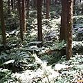 陽光灑落林間