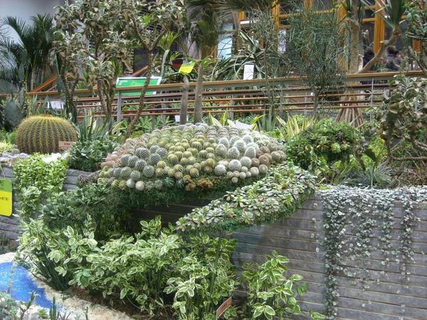 台北花博-未來館之多肉植物綠蠵龜