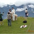新人來拍照,注意右上角的工作人員,正在用飼料引羊群過來