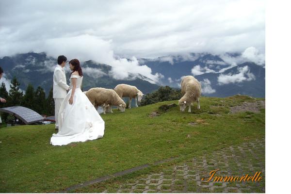 新娘裙擺添蹄印,天光雲影共徘徊(我是看熱鬧的鄉民)