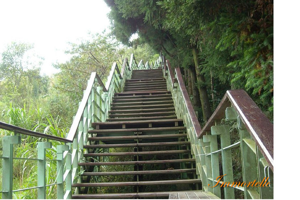 壽山園區487階的步步高升,當時深深慶幸自己是往下走(汗)