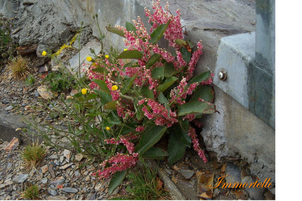高山公路邊的一叢小花