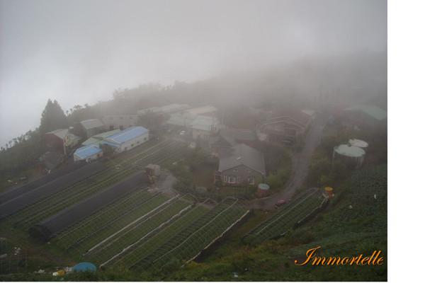 傍晚時徹底的霧鎖清境,能見度不到20公尺