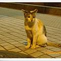 圓山站街貓