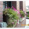 窗台上的花