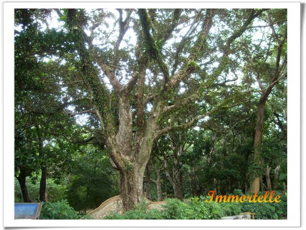 這棵樹讓我想起魔戒裏的樹人