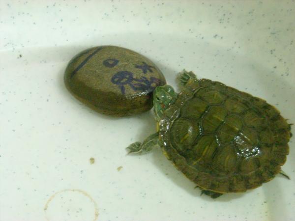 小龜與女友