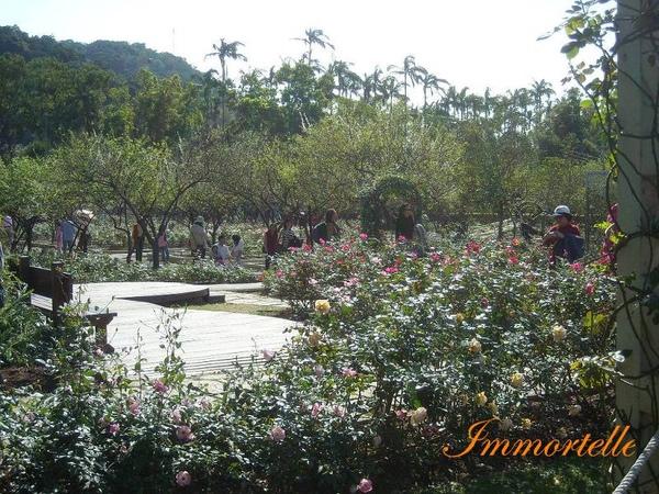 靠近玫瑰園就可聞到花香