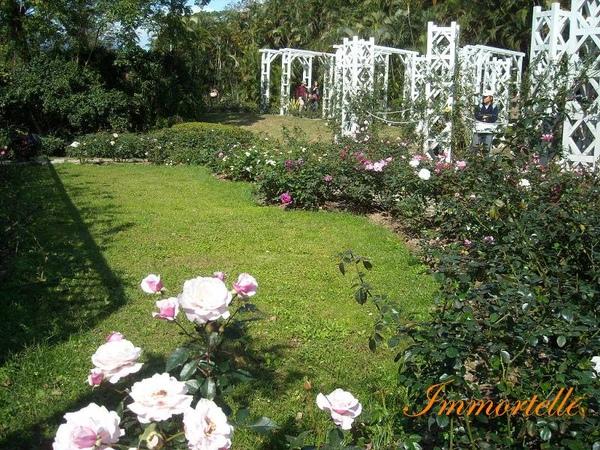 玫瑰園景觀
