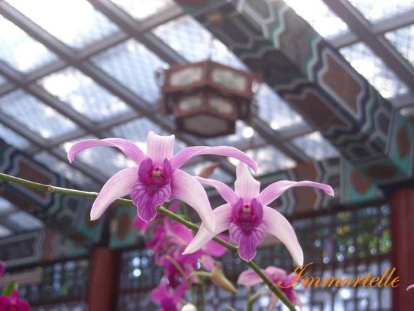 溫室是中國式的建築