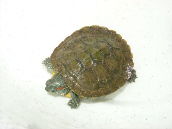 小龜2009-2