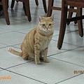 店貓-最愛吃蝦仁