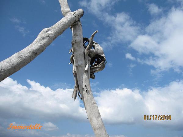 藍天下的漂流木創作