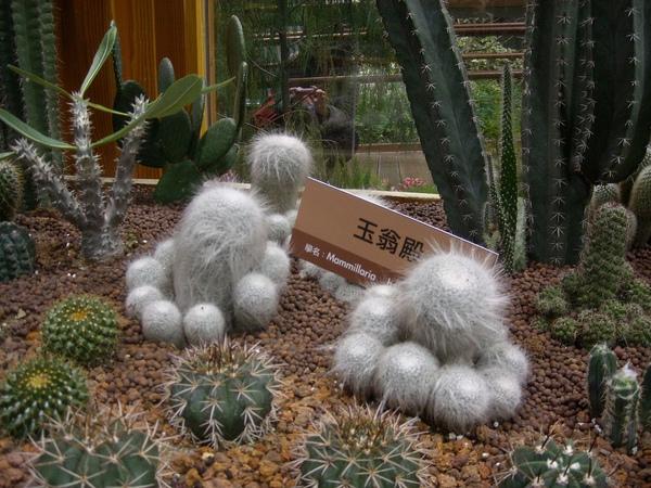 台北花博-未來館之多肉植物6
