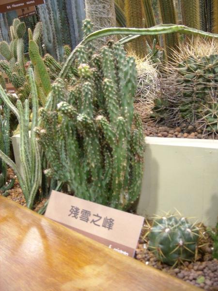 台北花博-未來館之多肉植物4