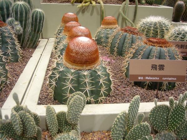 台北花博-未來館之多肉植物3