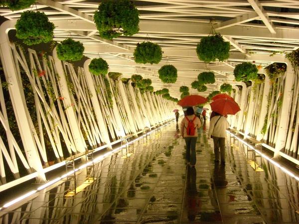 台北花博-雨夜裏的花之隧道