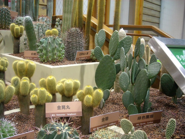 台北花博-未來館之多肉植物2