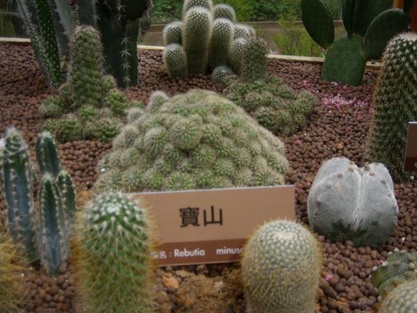 台北花博-未來館之多肉植物5