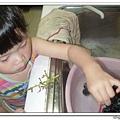 20070623洗葡萄0.jpg