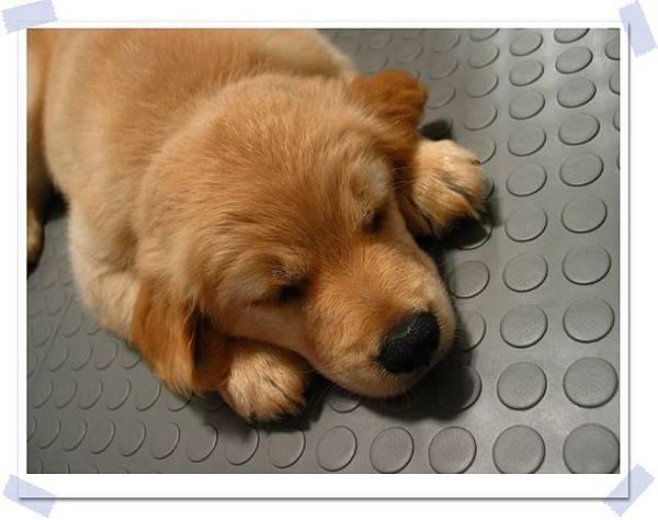 你現在睡的很開心,那我怎麼辦?